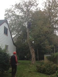 Tree Pruning Newmarket