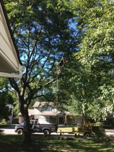 Tree Pruning Richmond Hill