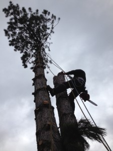 Tree Removal in Newmarket ON