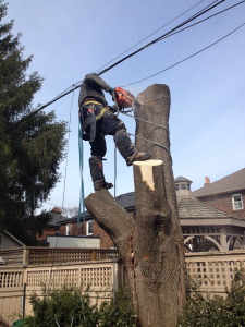 Tree Removal Richmond Hill