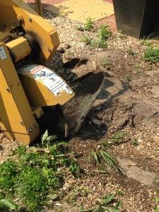 tree stump grinding Ontario