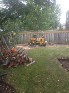 Firewood available in Newmarket ON
