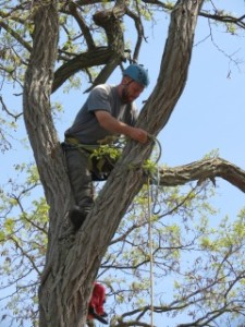 tree removal King Ontario