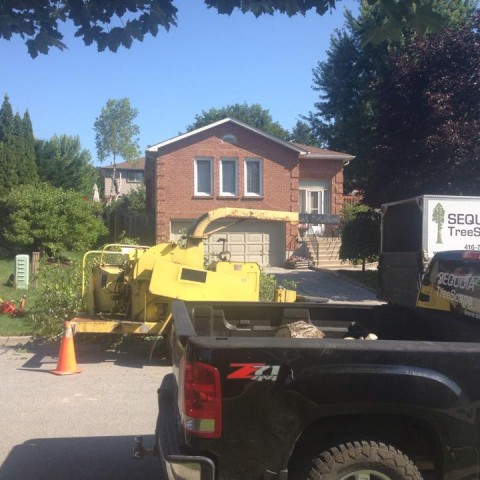Tree Removal in Newmarket