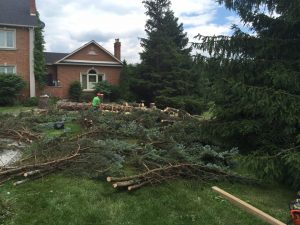 Efficient Pruning of Evergreens
