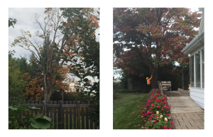Alliston-ON-Tree-Removal-Pruning