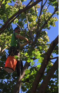 New Tecumseth ON Tree Pruning