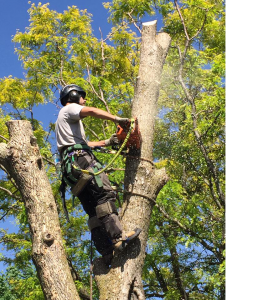 Tree Removal Tottenham ON