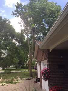Markham ON Tree Service removing tree