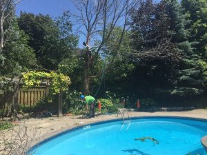 Vaughan Tree Service pruning a backyard tree