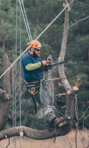 Sequoia TreeScape Arborist