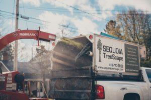 Sequoia TreeScape Truck