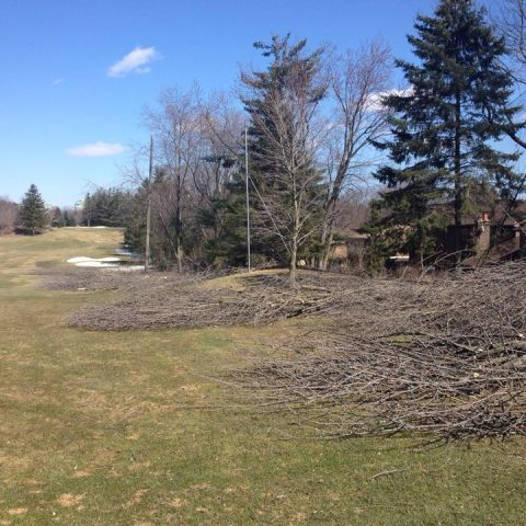 Golf Course Tree Care – Ladies Golf Club of Toronto