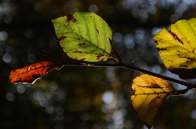 trees and drought york region arborist sequoia treescape