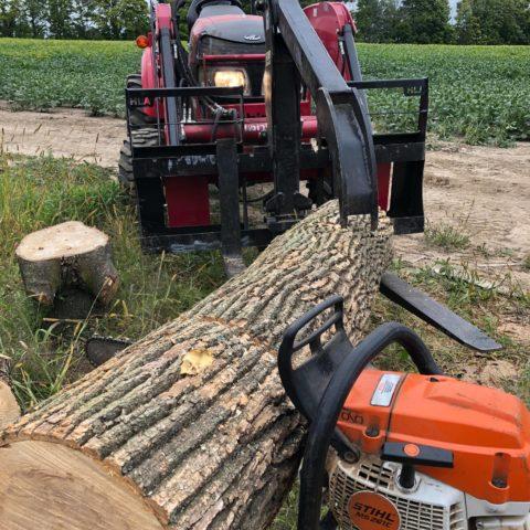 Tree Trunk Pre-Slab