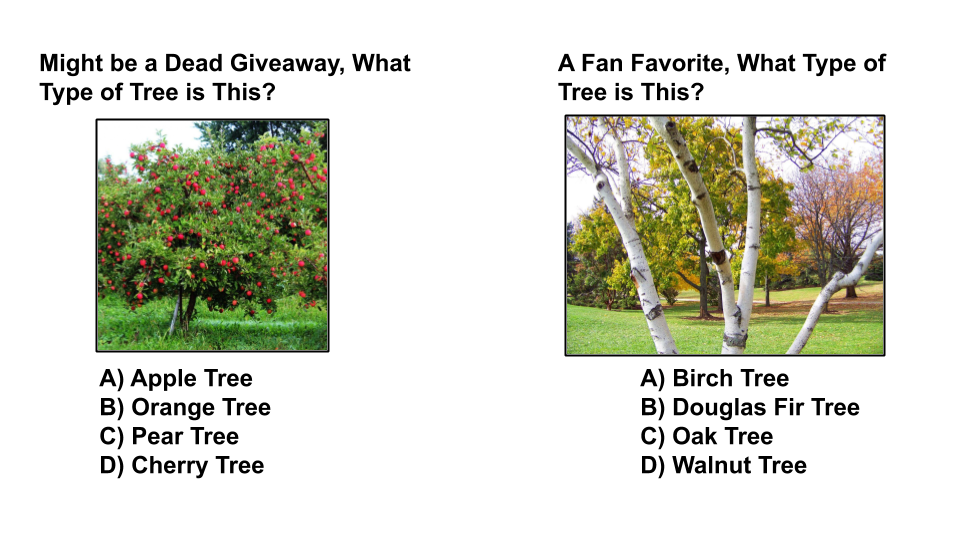 tree type quiz 2 sequoia treescape aurora arborist