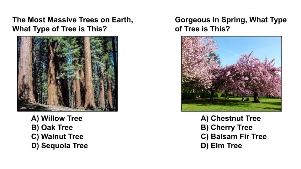 tree type quiz 4 sequoia treescape markham arborist