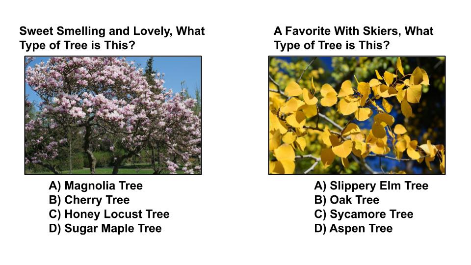 tree type quiz 7 sequoia treescape aurora arborist