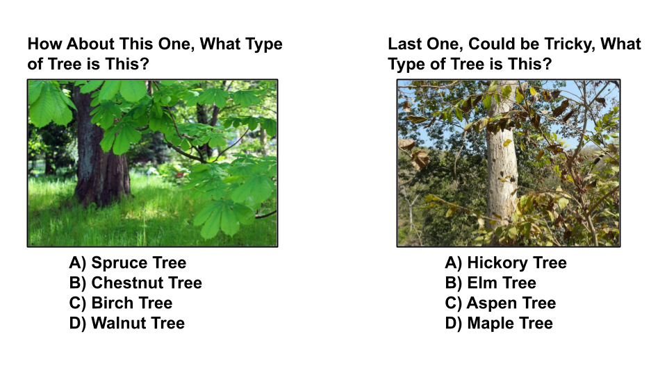 tree type quiz 8 sequoia treescape newmarket arborist