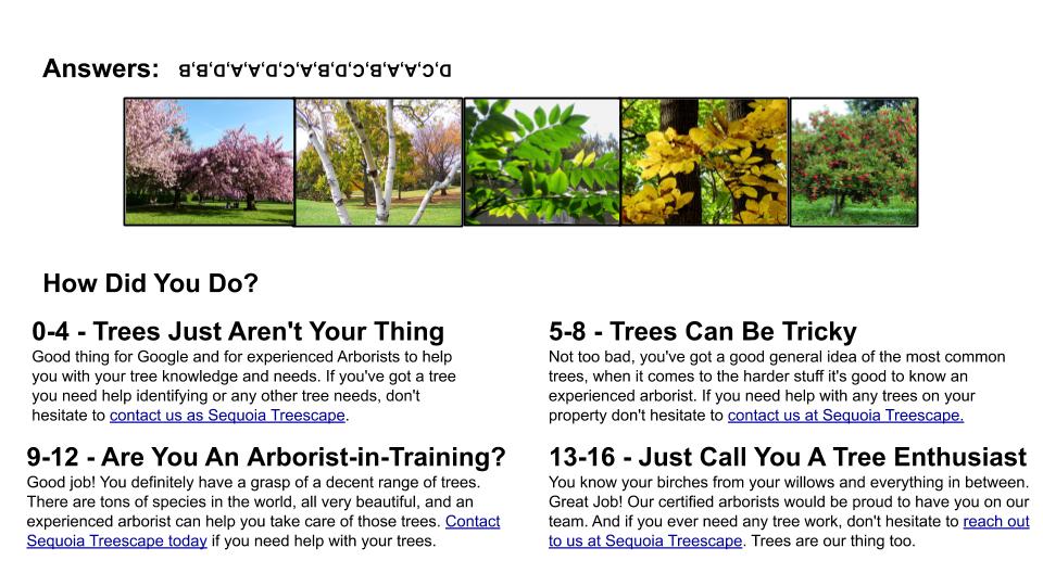 tree type quiz answers sequoia treescape york region arborist