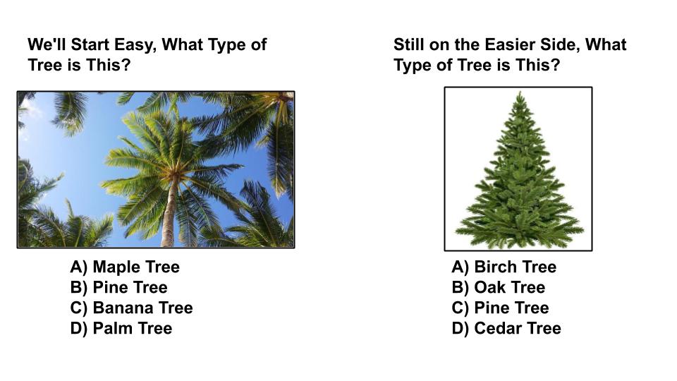 tree type quiz one sequoia treescape newmarket arborist